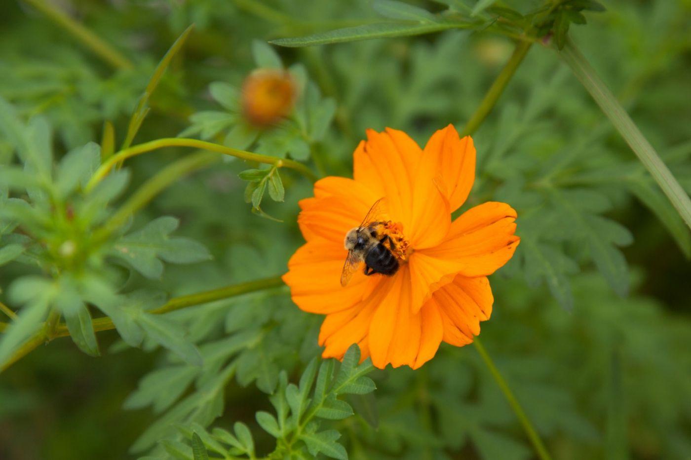 蜂在花丛中_图1-7