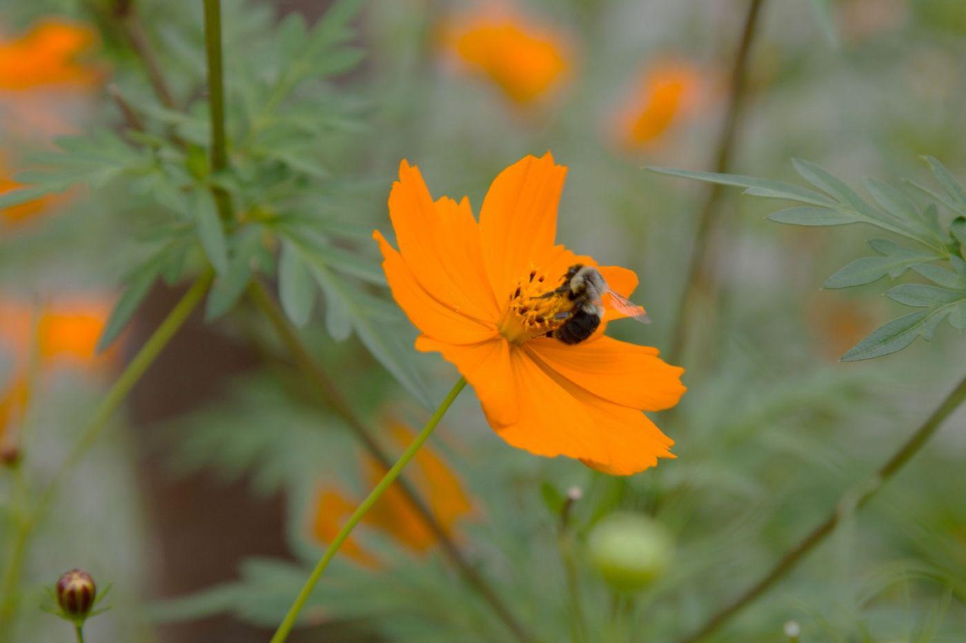 蜂在花丛中_图1-8