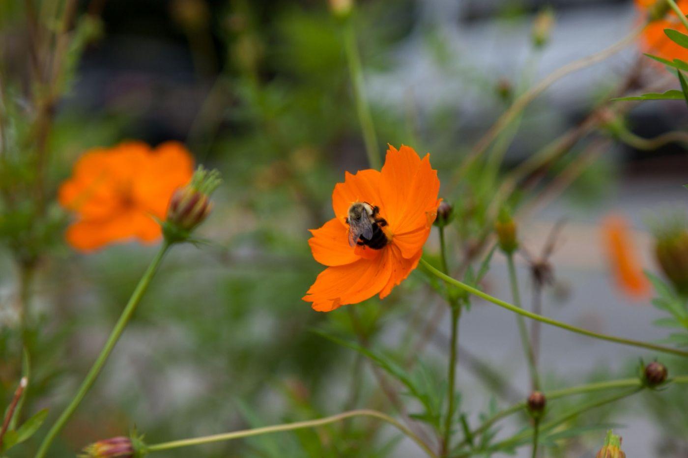 蜂在花丛中_图1-9