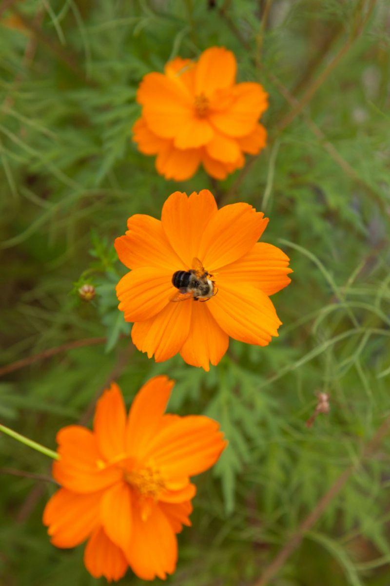 蜂在花丛中_图1-14