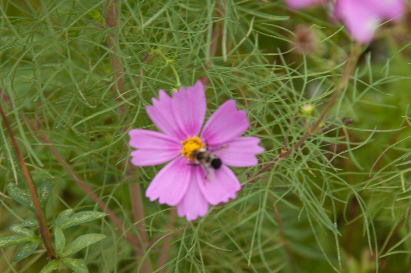 蜂在花丛中_图1-10
