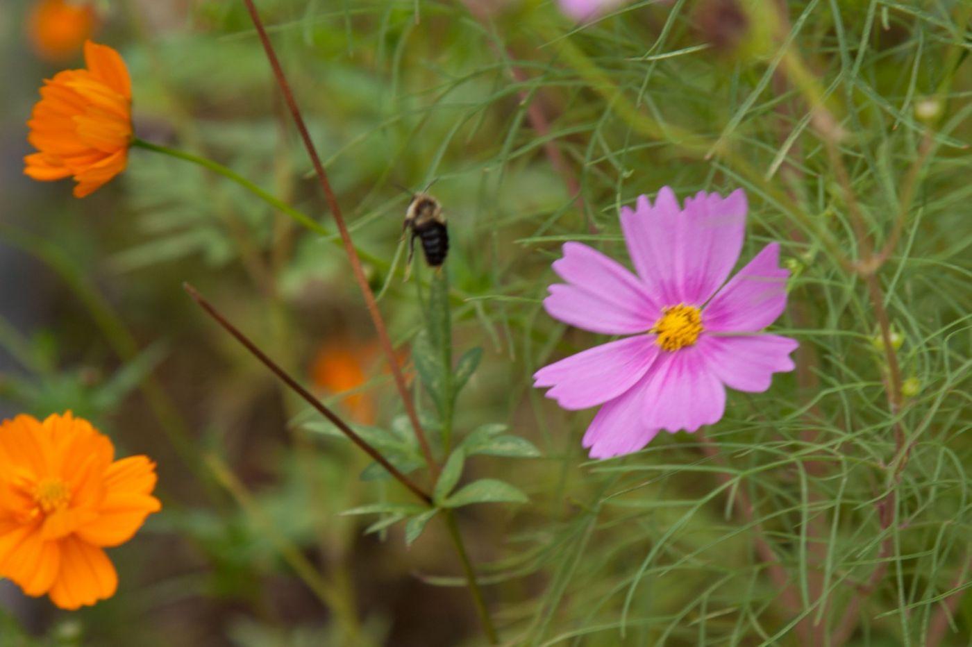 蜂在花丛中_图1-11
