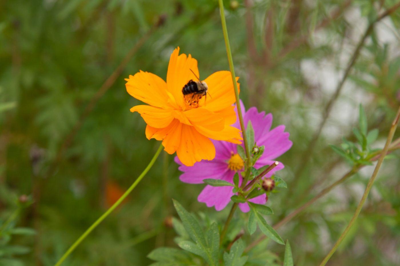 蜂在花丛中_图1-12