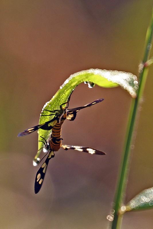 植物园小昆虫_图1-1