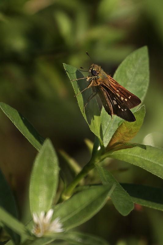 植物园小昆虫_图1-3