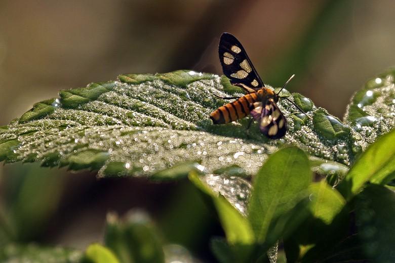 植物园小昆虫_图1-5