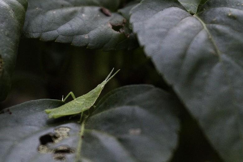 植物园小昆虫_图1-8
