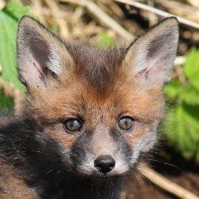 巧遇小狐狸