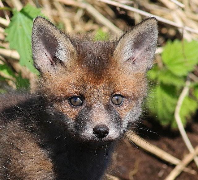 巧遇小狐狸_图1-10