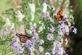 蝴蝶纷飞花丛中