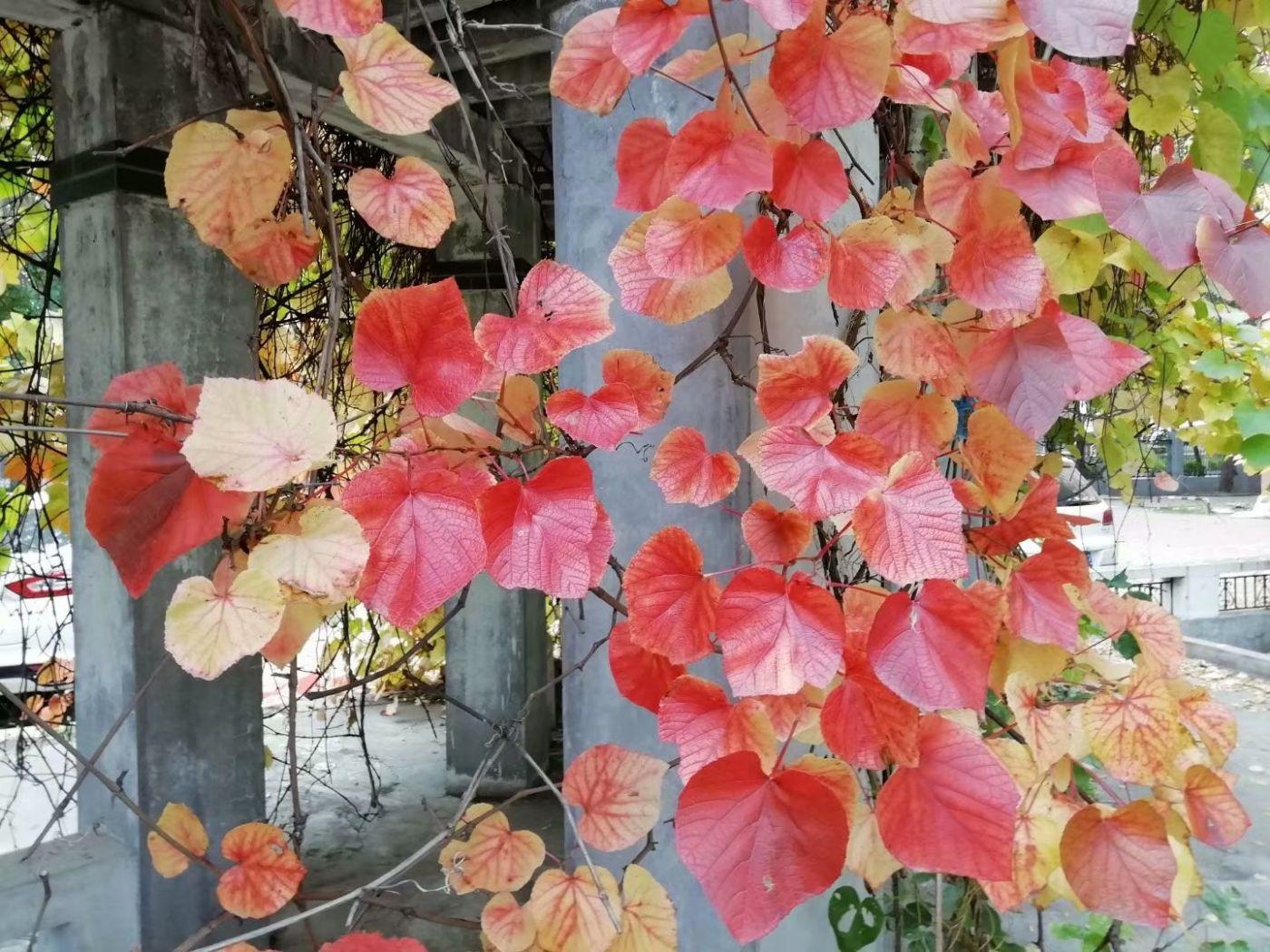 林园秋色(图)_图1-1