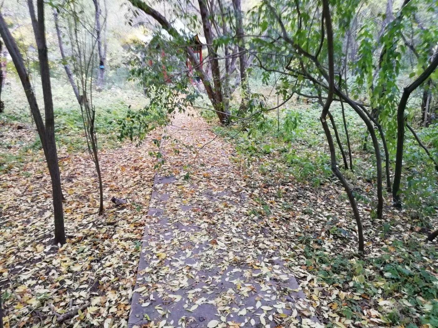林园秋色(图)_图1-9