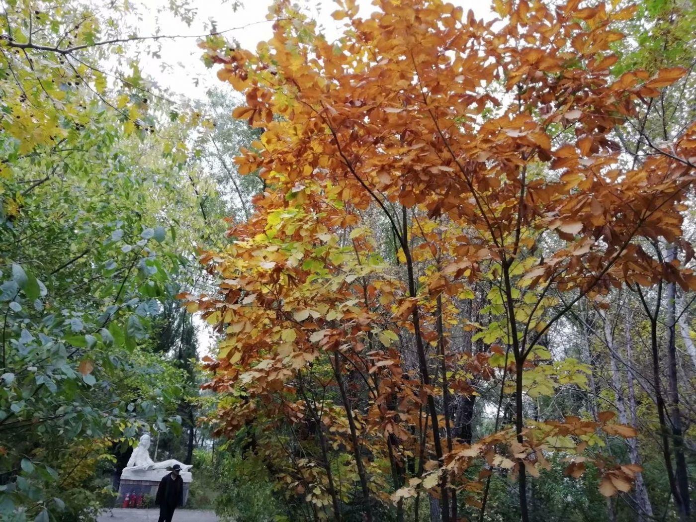 林园秋色(图)_图1-17