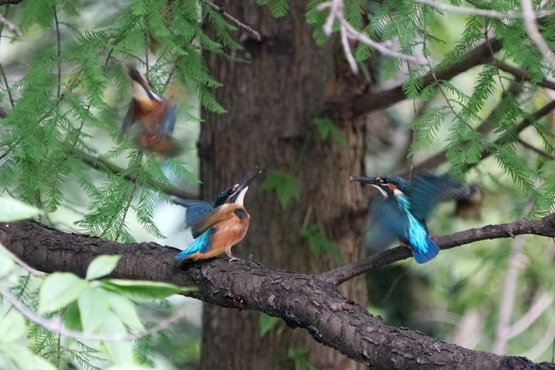 喧闹的翠树林_图1-4