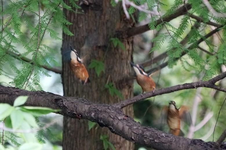 喧闹的翠树林_图1-8