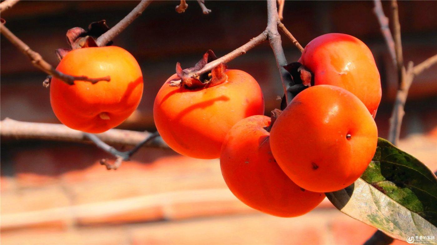 柿子也很漂亮_图1-1