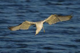 这海鸥的举动把我的镜头吸引住