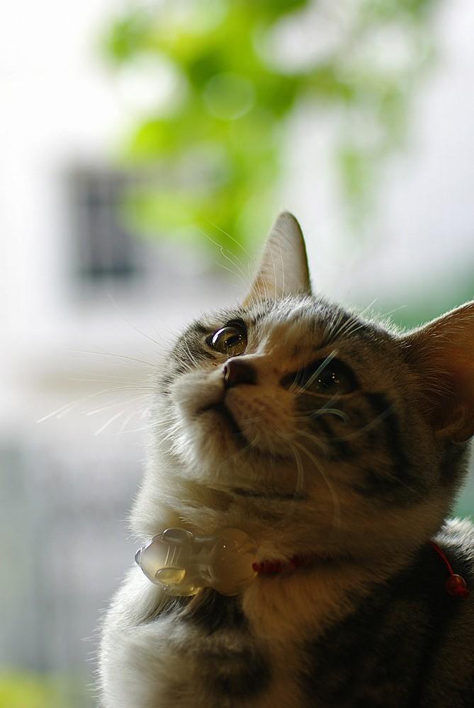 可爱的猫_图1-2