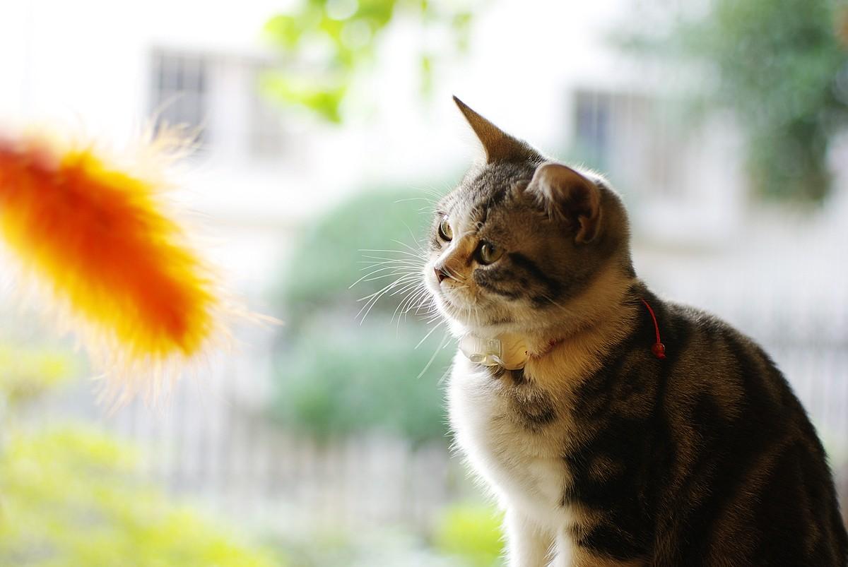 可爱的猫_图1-3