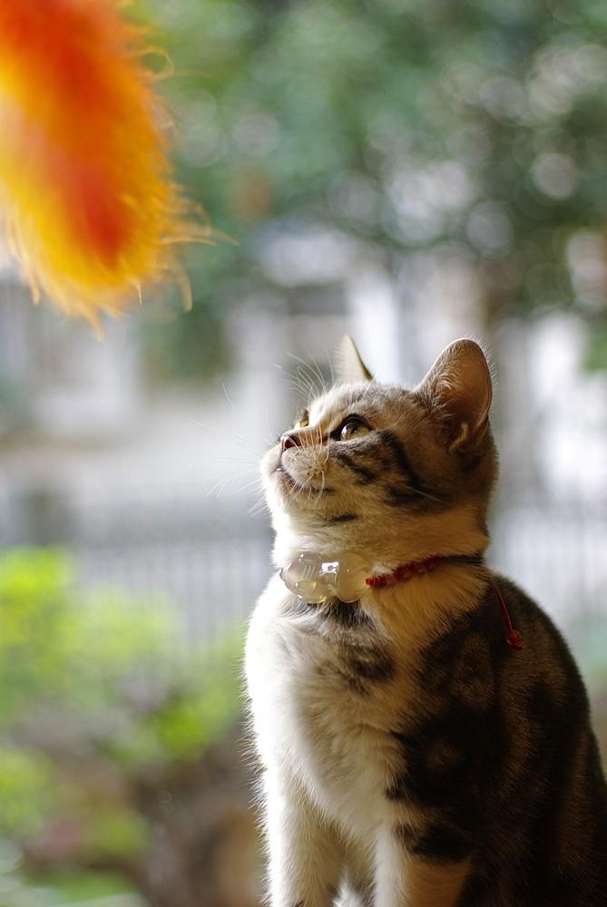 可爱的猫_图1-4