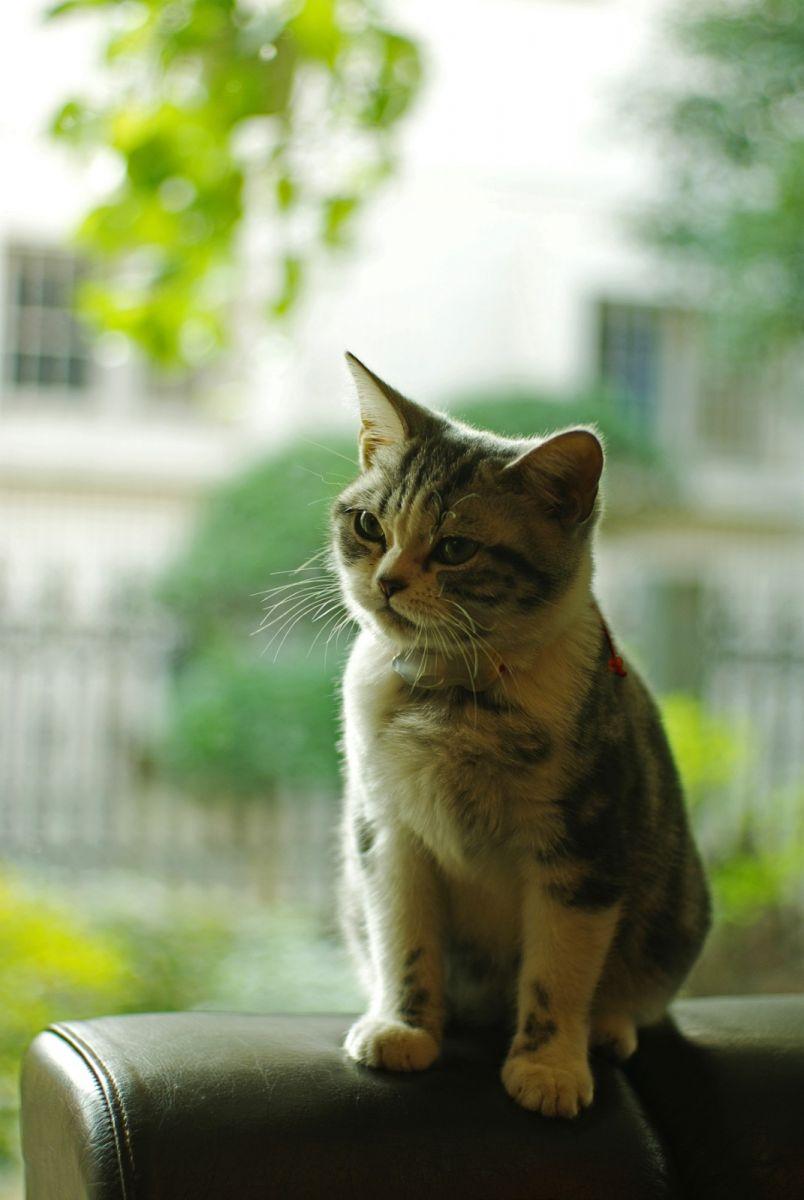 可爱的猫_图1-5