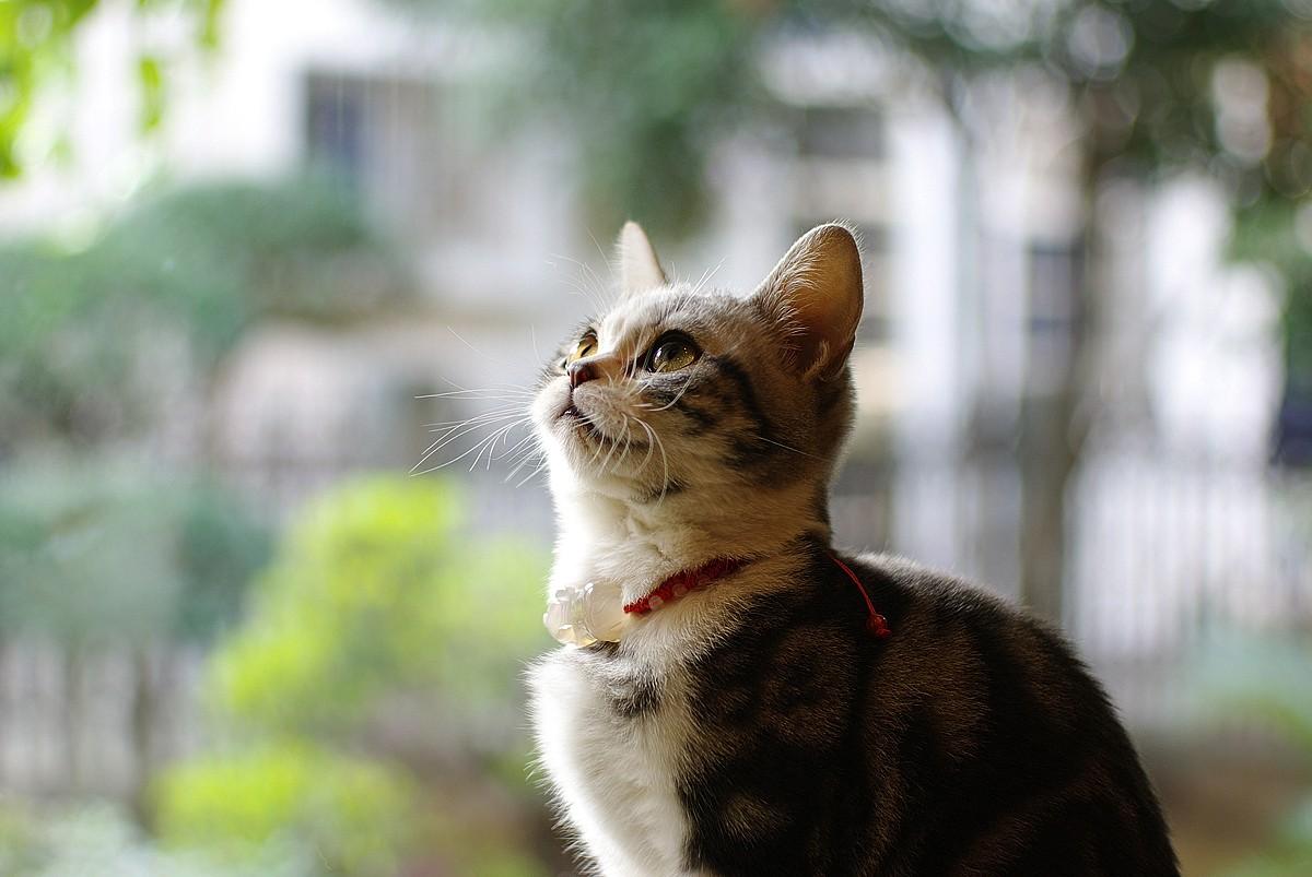 可爱的猫_图1-6