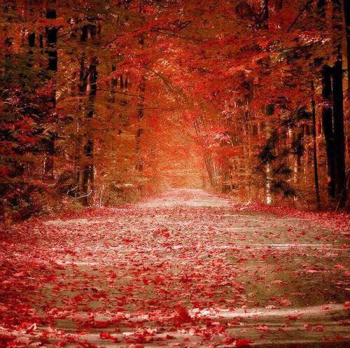 美丽的枫叶林,去过却没这么火红的颜色,很是遗憾_图1-1