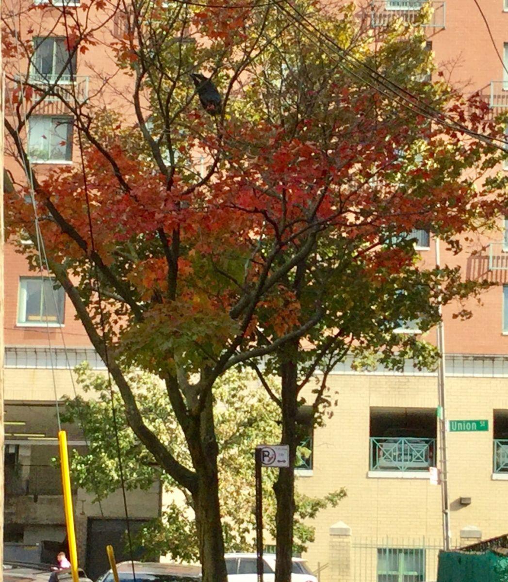 枫叶红了_图1-3