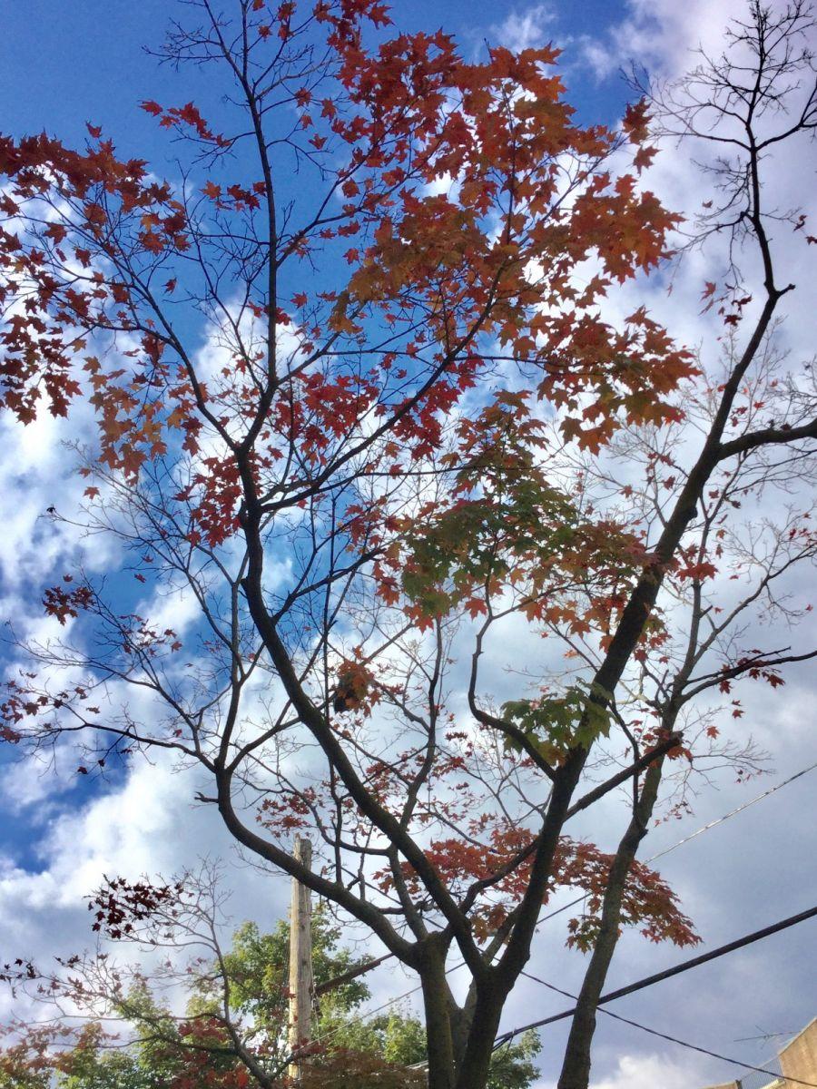 枫叶红了_图1-8