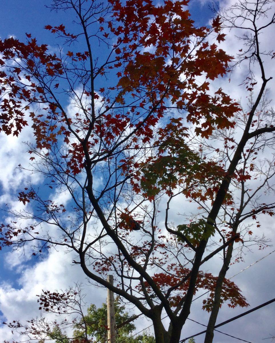 枫叶红了_图1-9