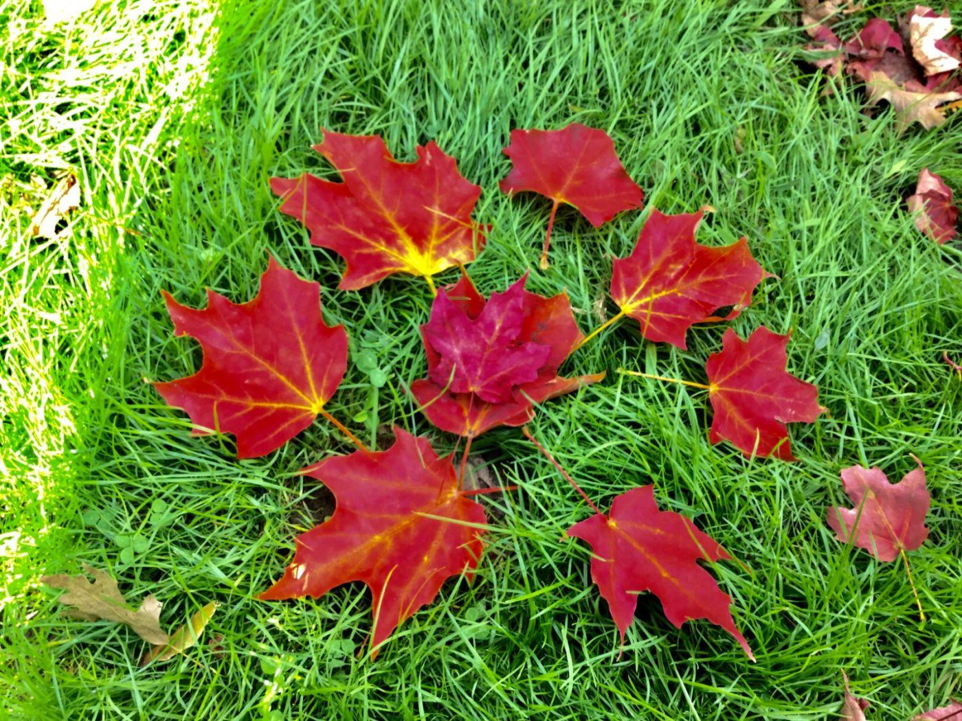 枫叶红了_图1-17