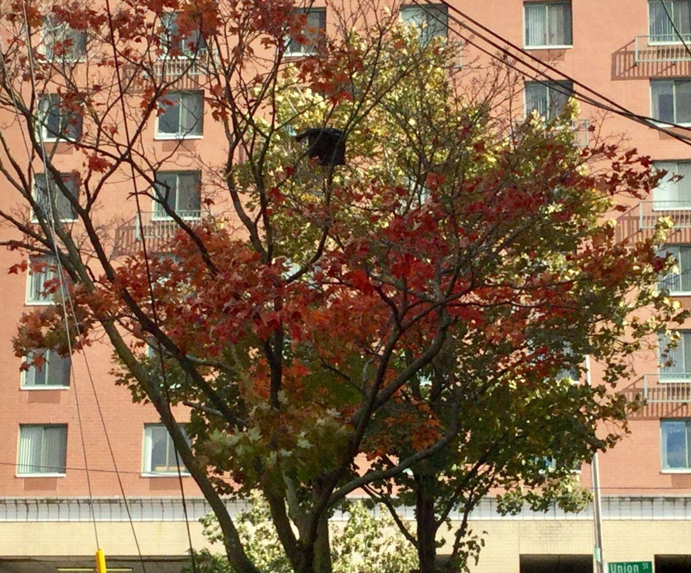 枫叶红了_图1-16