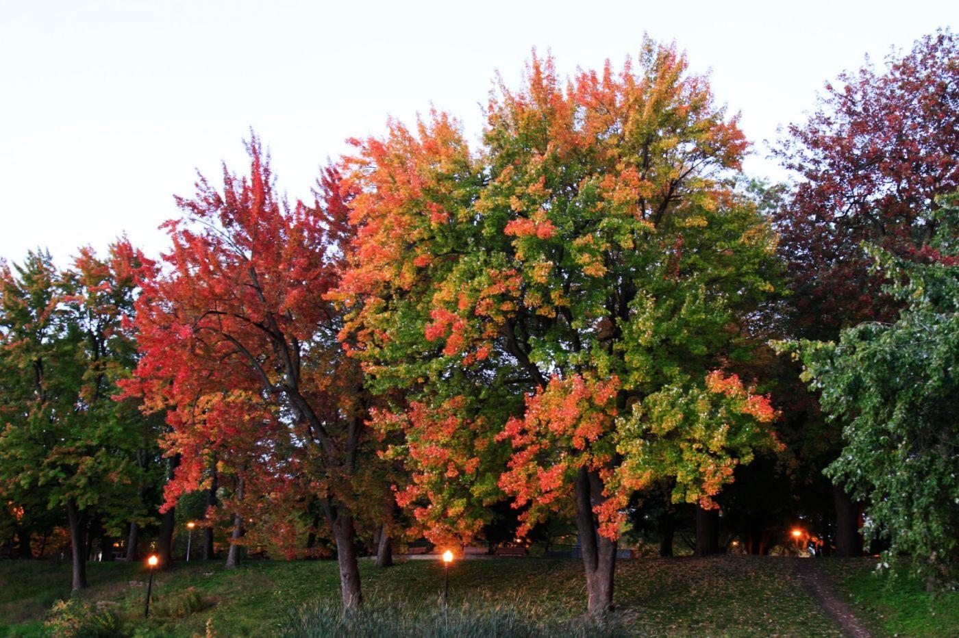 清晨在加拿大蒙特利尔公园赏枫_图1-5