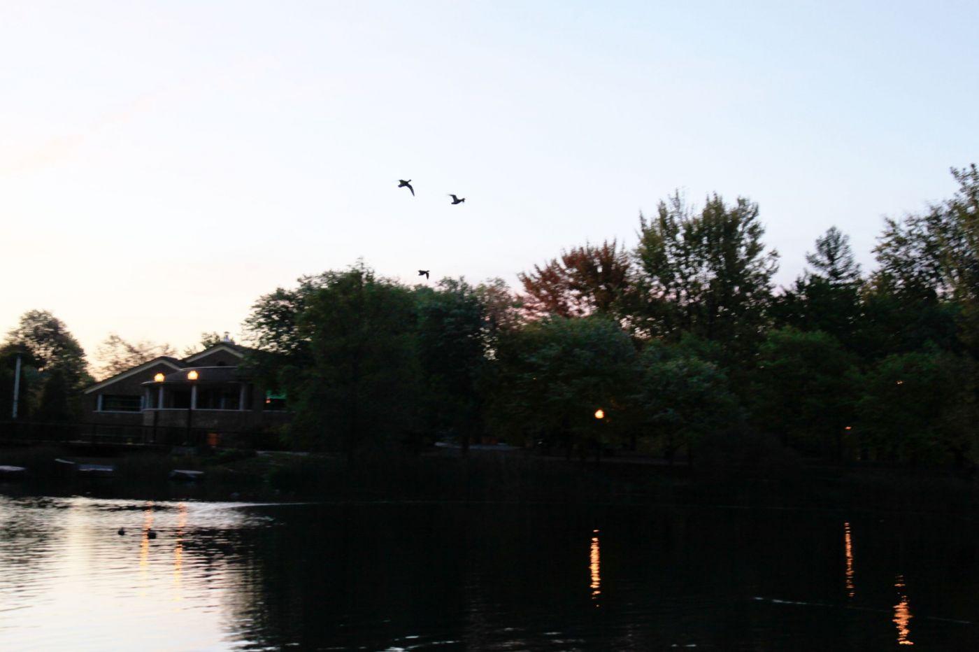 清晨在加拿大蒙特利尔公园赏枫_图1-7