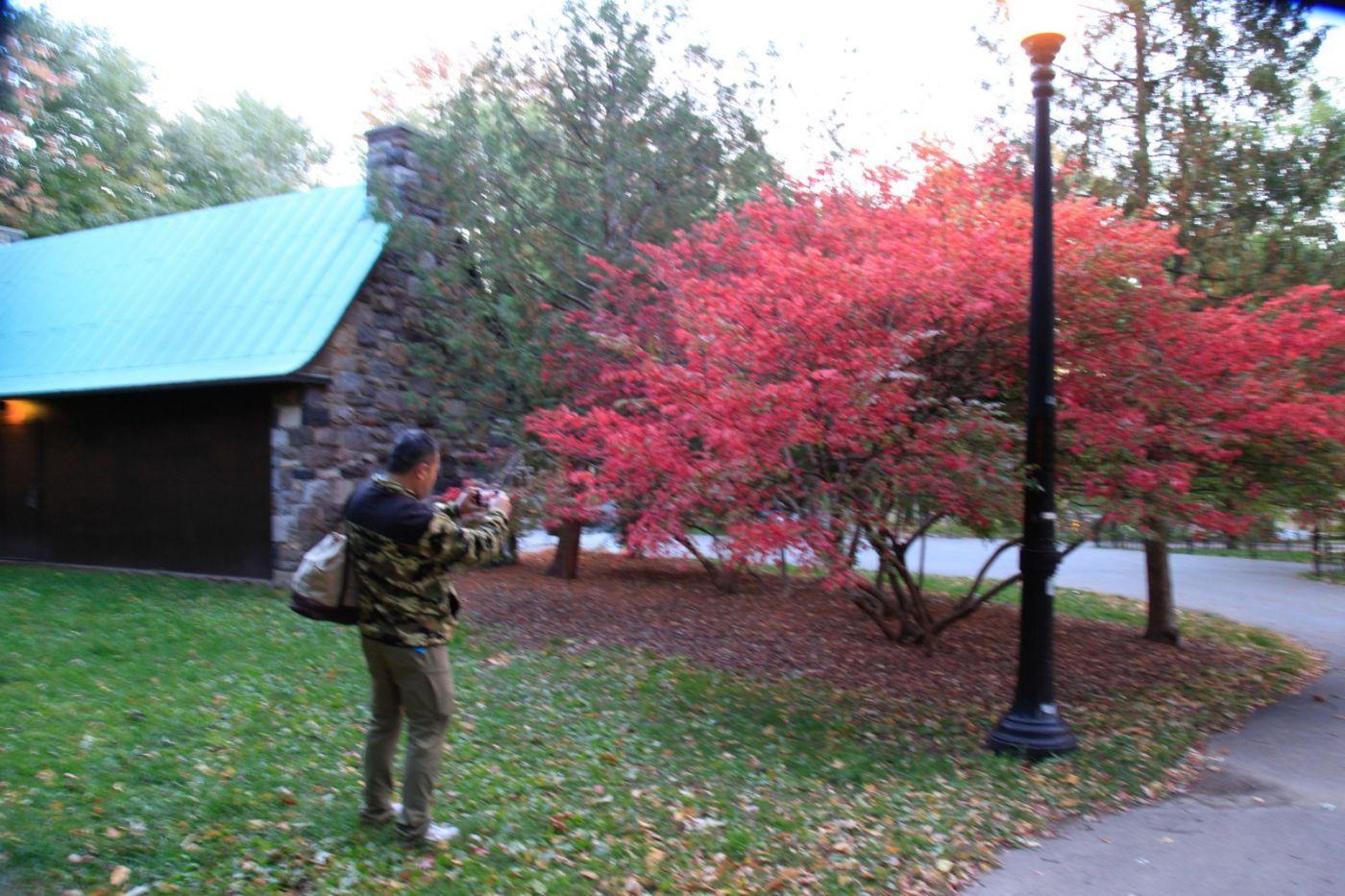 清晨在加拿大蒙特利尔公园赏枫_图1-10