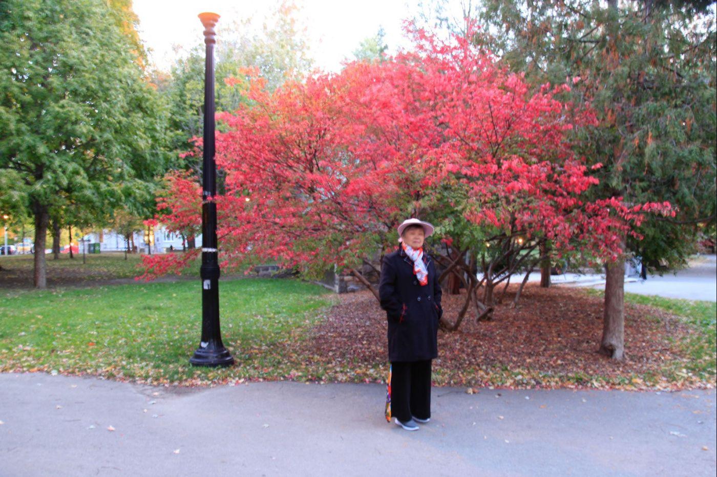 清晨在加拿大蒙特利尔公园赏枫_图1-9