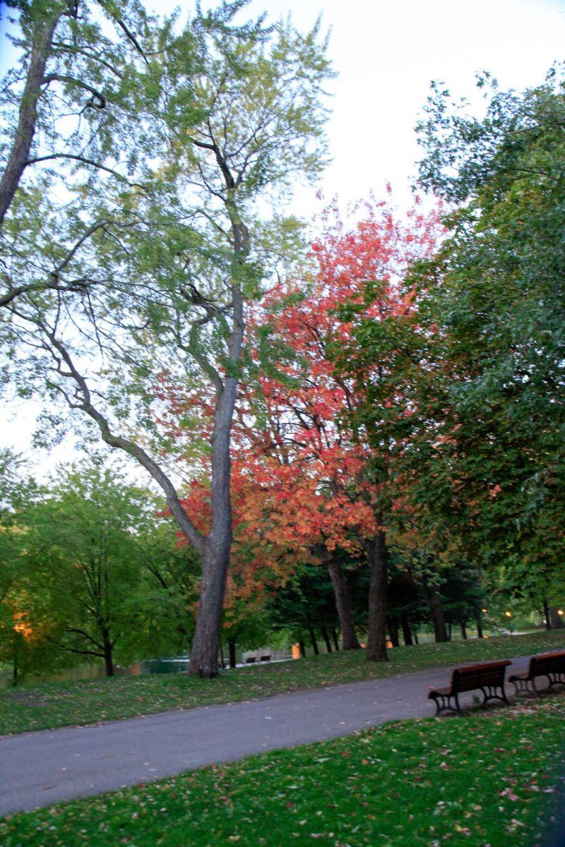 清晨在加拿大蒙特利尔公园赏枫_图1-11