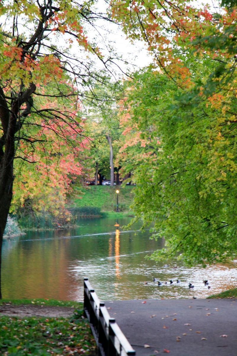 清晨在加拿大蒙特利尔公园赏枫_图1-13