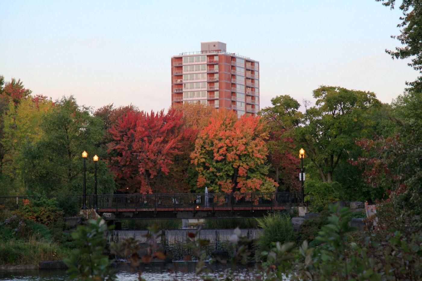 清晨在加拿大蒙特利尔公园赏枫_图1-16