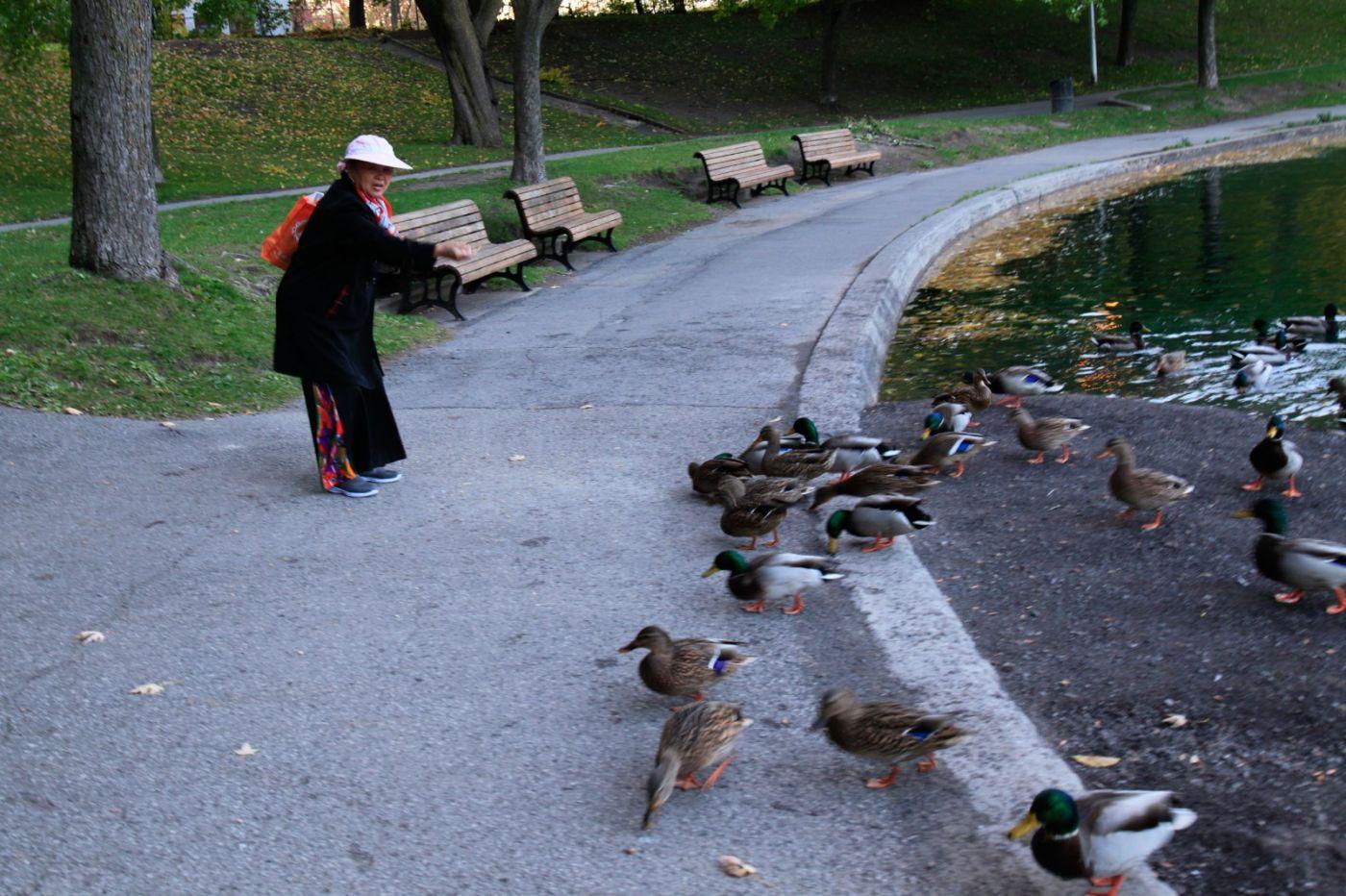 清晨在加拿大蒙特利尔公园赏枫_图1-18