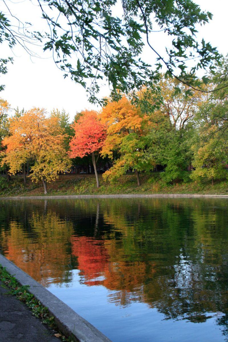 清晨在加拿大蒙特利尔公园赏枫_图1-20
