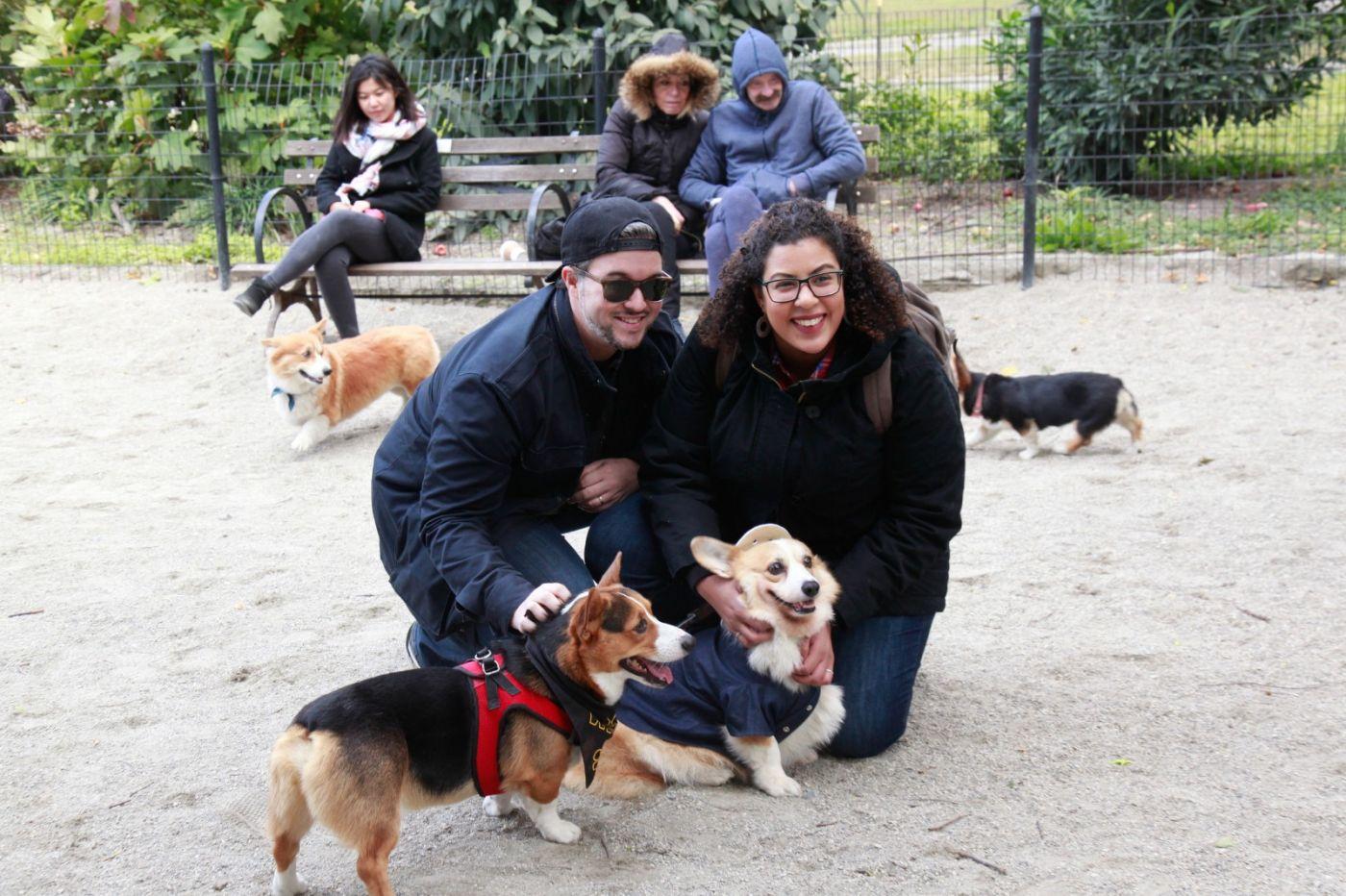 养狗爱好者带了爱犬欢聚一堂,相互交流_图1-2