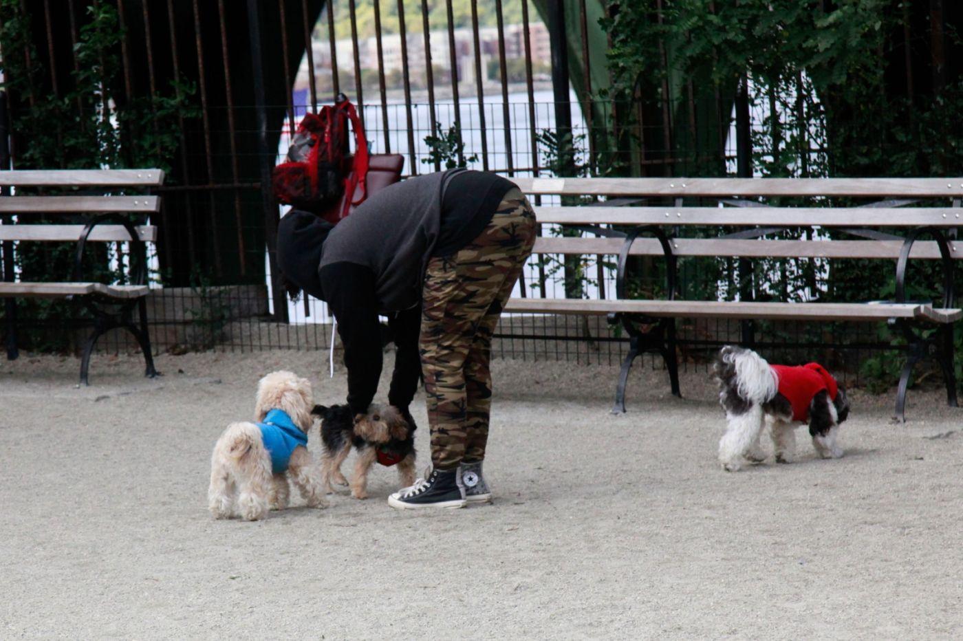 养狗爱好者带了爱犬欢聚一堂,相互交流_图1-3