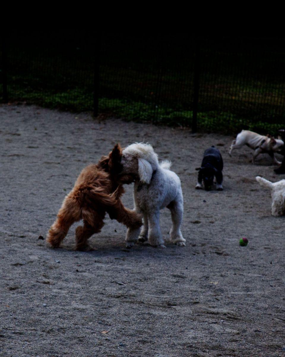 养狗爱好者带了爱犬欢聚一堂,相互交流_图1-4