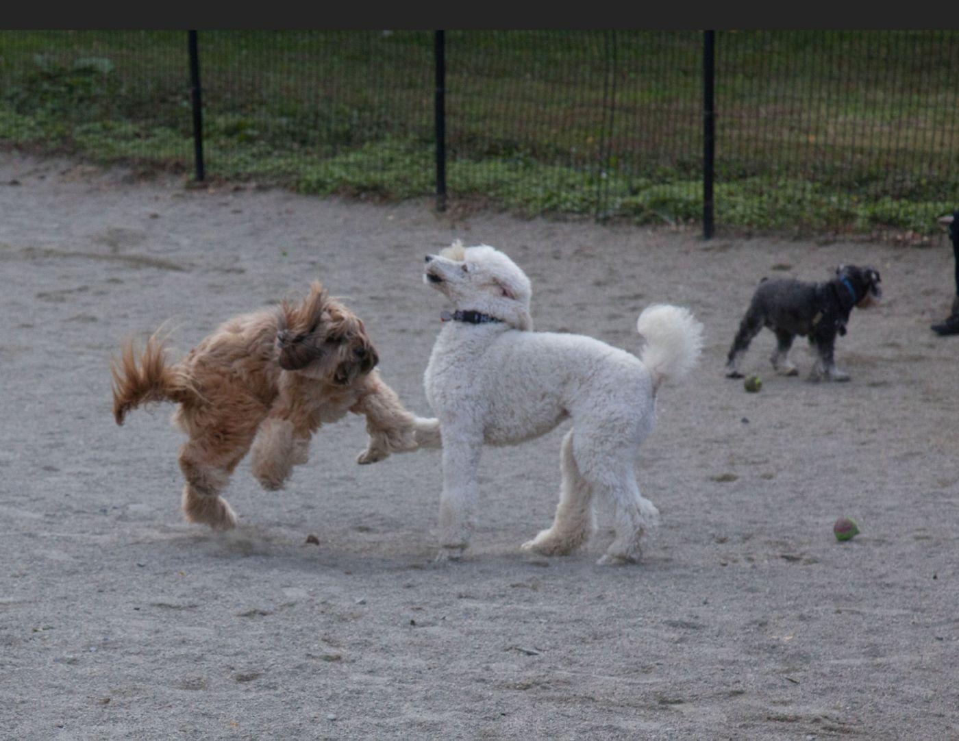 养狗爱好者带了爱犬欢聚一堂,相互交流_图1-5