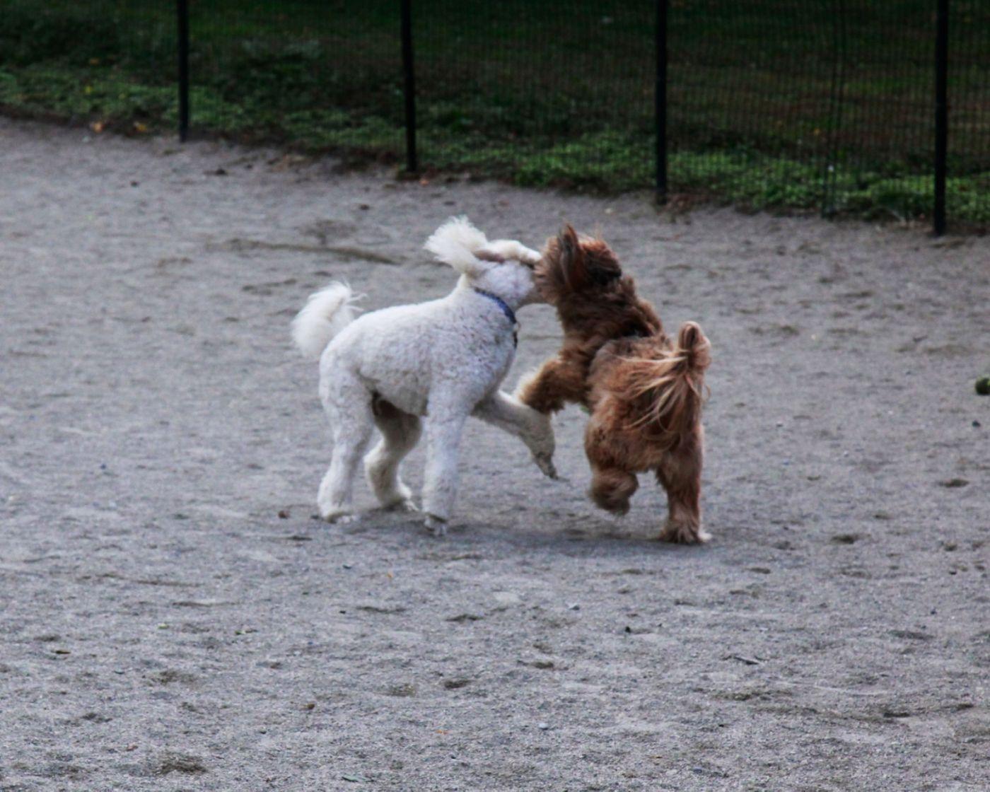 养狗爱好者带了爱犬欢聚一堂,相互交流_图1-6