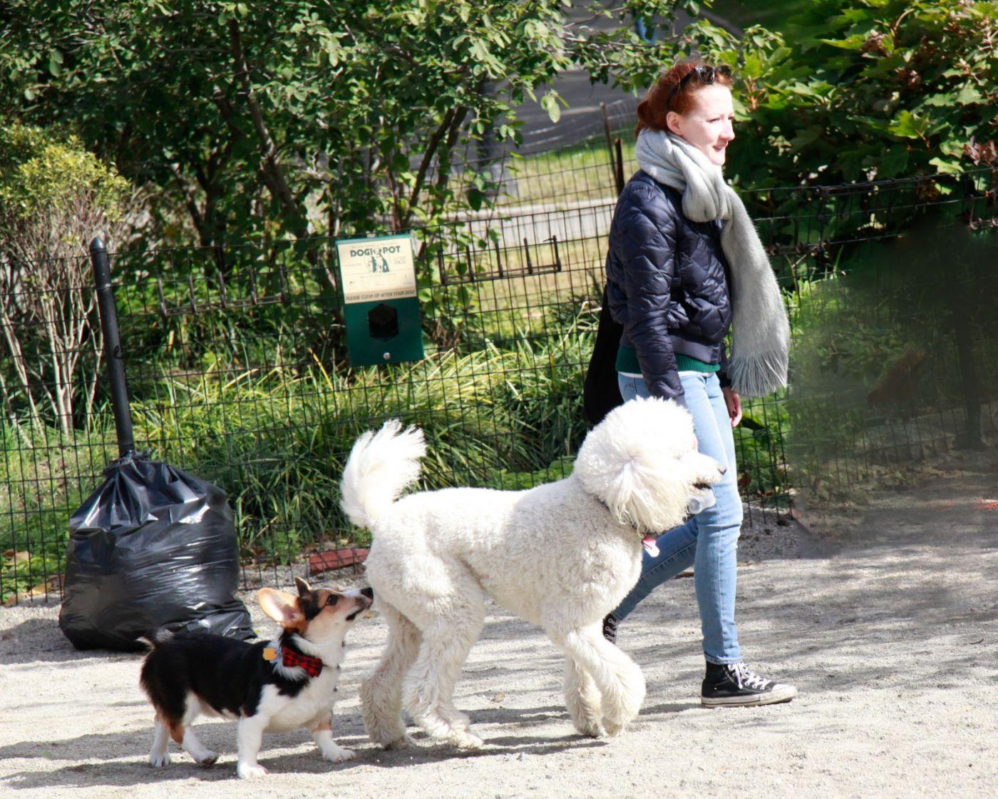 养狗爱好者带了爱犬欢聚一堂,相互交流_图1-8