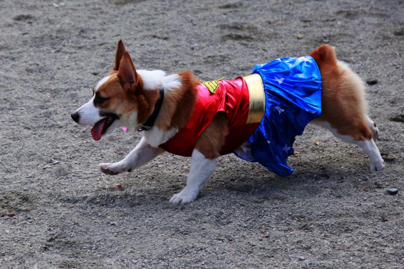 养狗爱好者带了爱犬欢聚一堂,相互交流_图1-9