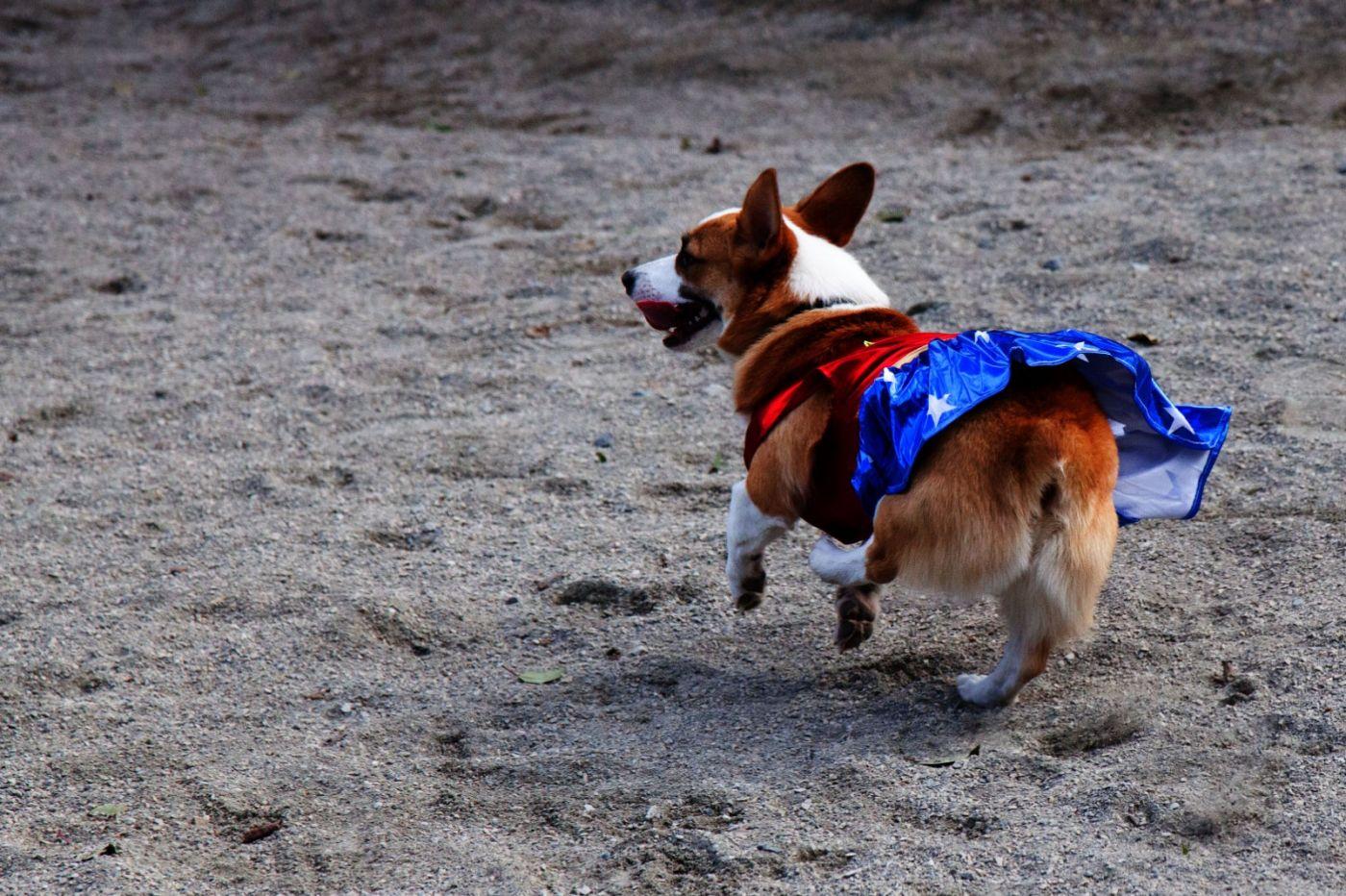 养狗爱好者带了爱犬欢聚一堂,相互交流_图1-22