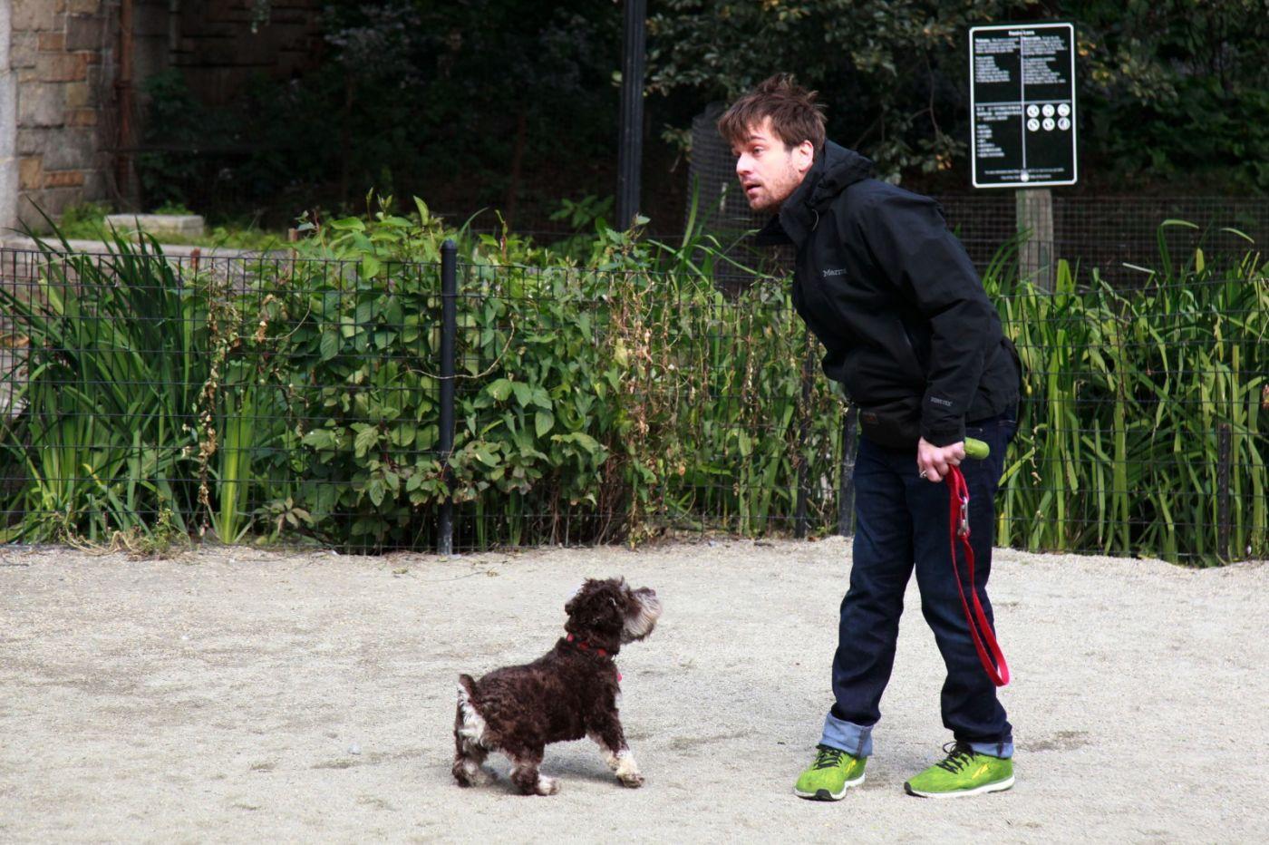 养狗爱好者带了爱犬欢聚一堂,相互交流_图1-11
